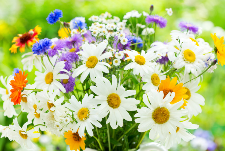 花のぬり絵特集「春夏編」